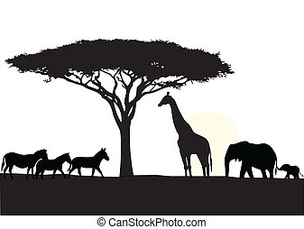 áfrica, fundo, silueta