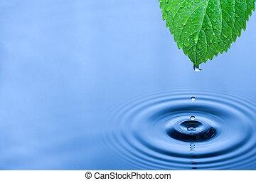 água, verde, gotas, folha