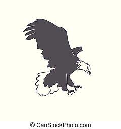águia, branca, calvo, isolado, fundo