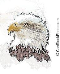 águia, cabeça, coloridos, grande, esboço, ilustração, isolado, realístico, hand-drawn, vetorial, fundo, estilo, transparente