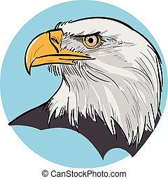 águia, ilustração, head.