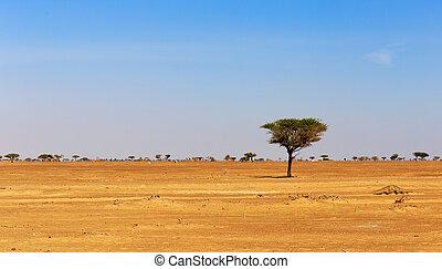 árabe, só, árvore, deserto