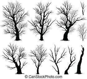 árvore, arrepiado
