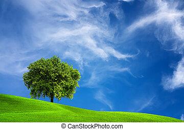 árvore carvalho, natureza