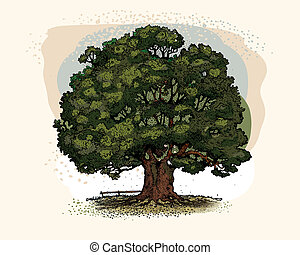árvore carvalho