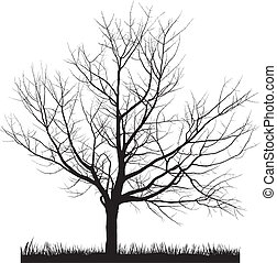 árvore cereja, inverno
