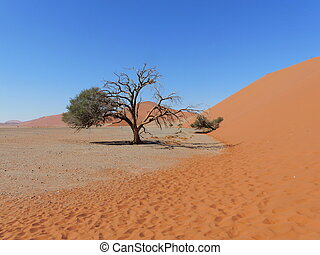 árvore, deserto