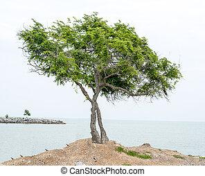 árvore, experiência., mar, verde