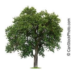 árvore, isolado, maçã
