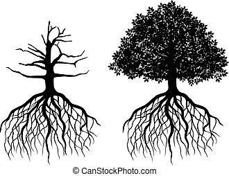 árvore, isolado, raizes