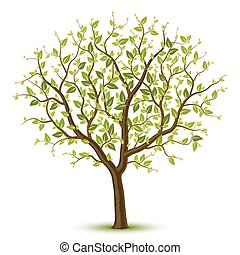 árvore, leafage, verde