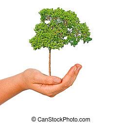 árvore, mão