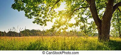 árvore, manhã, luz, foliage