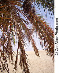 árvore palma