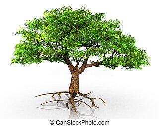 árvore, raizes, exposto