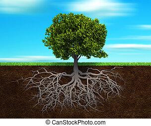 árvore, rood