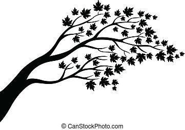 árvore, silueta, maple