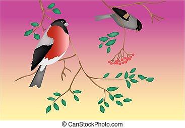 árvore., twilight., vector., pássaros