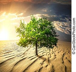 árvore verde, deserto