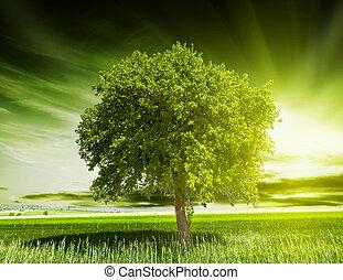árvore verde, natureza