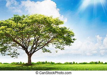 árvore verde, paisagem, natureza