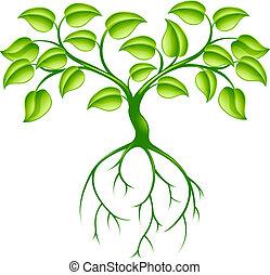 árvore verde, raizes