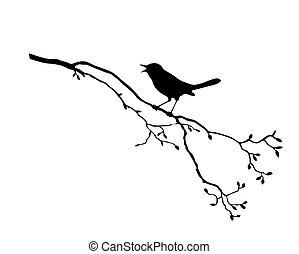árvore, vetorial, silueta, pássaro, ramo