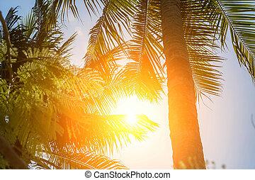 árvores., férias, verão, brilhar, palma, sol, alto, através, fundo