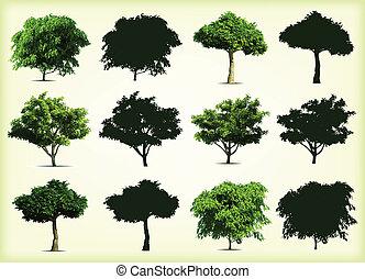 árvores., vetorial, verde, cobrança, ilustração