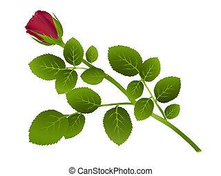 única rosa vermelha