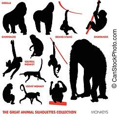 -, animal, cobrança, macacos