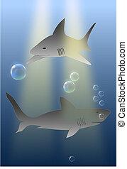 -, tubarões, marinho, predadores, oceânicos