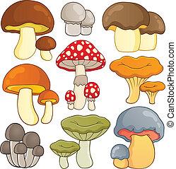 1, tema, cogumelo, cobrança