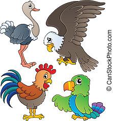 1, tema, jogo, vário, pássaros