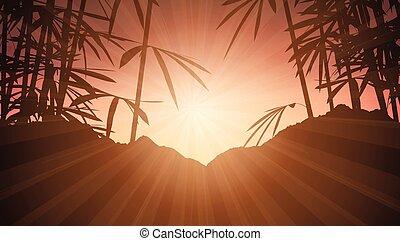 1906, pôr do sol, bambu, céu, contra