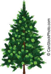 abeto, vetorial, árvore