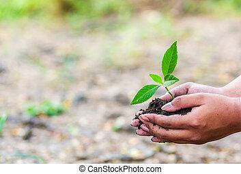 agricultura, salvar, árvore, soil., mundo, conceito, pequeno, segurando mão