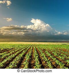 agricultura, verde, campo sol