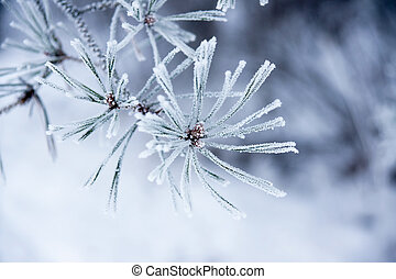 agulhas, inverno