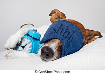alarme, máscara adormecida, cão, relógio