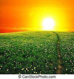 amanhecer, dandelion, campo