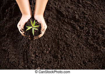 amor, mãos, global, reduzir, árvore, abundante, importar-se, plantar, natureza, jovem, meio ambiente, segurando, planta, árvores, solo, criança, mundo, dia, warming, verde, seedlings, crescendo