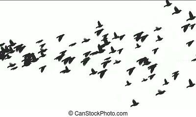 animação, pássaros