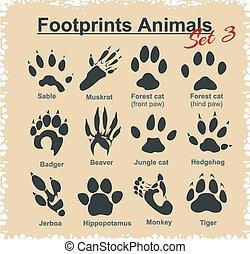 animais, pegadas, vetorial, -, set.