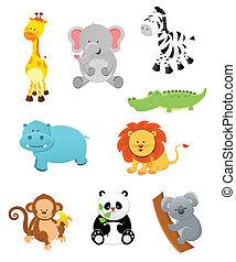 animais, safari