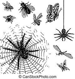 antigüidade, insetos, jogo, (vector)