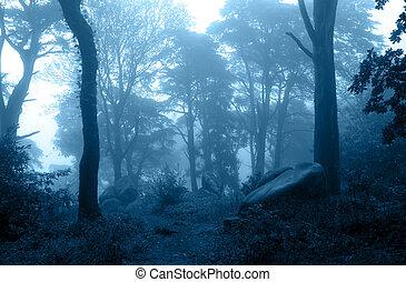 arbustos, árvores, floresta, misteriosa, nebuloso, paisagem