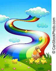 arco íris, dela, ducklings, acima, pato, hilltop