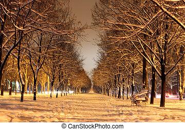 avenida, inverno