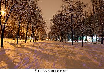 avenida, noturna